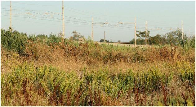 Erbacce e rifiuti: partono i controlli nei terreni privati